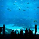 Georgia Aquarium, GA