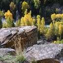 Grand Teton NP - WY