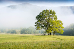 Cades Cove - Great Smoky Mountains NP, TN