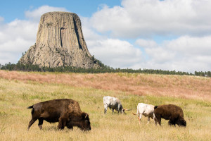 Devils Tower NM - WY