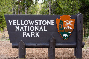 Yellowstone NP - MT
