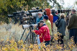 Moose paparazzi - Grand Teton NP