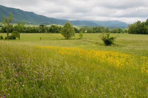 Cades Cove - GSMNP, TN